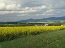 Krajobrazy Roszyc